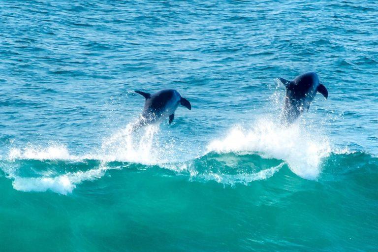 Dolphins @ Zimbali Beach